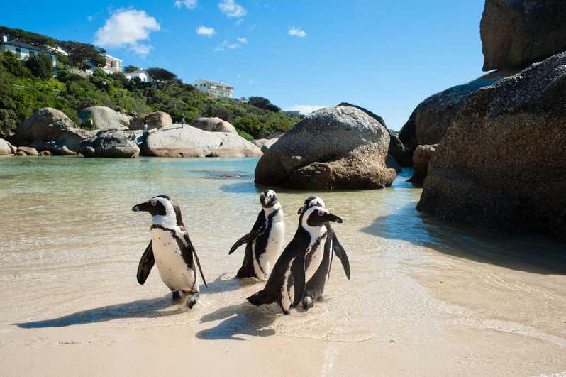 Cape Peninsula Tour - Cape Town Day Tours